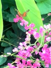 butterflypavillion