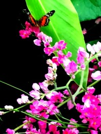 butterfly - Edited